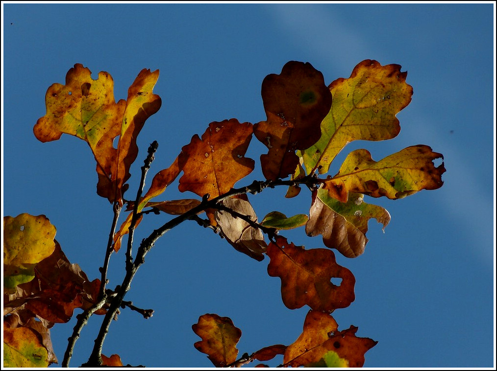 Herbst. 06.11.2011 (Jeanny)