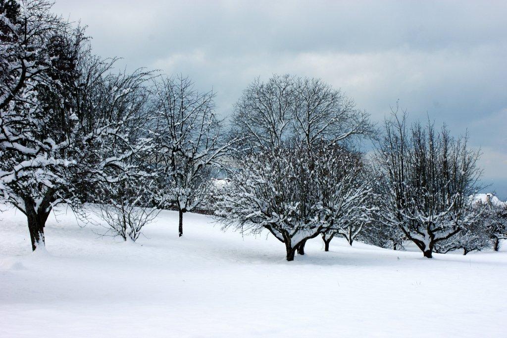 schneebedeckte obstb ume verzaubern die landschaft. Black Bedroom Furniture Sets. Home Design Ideas