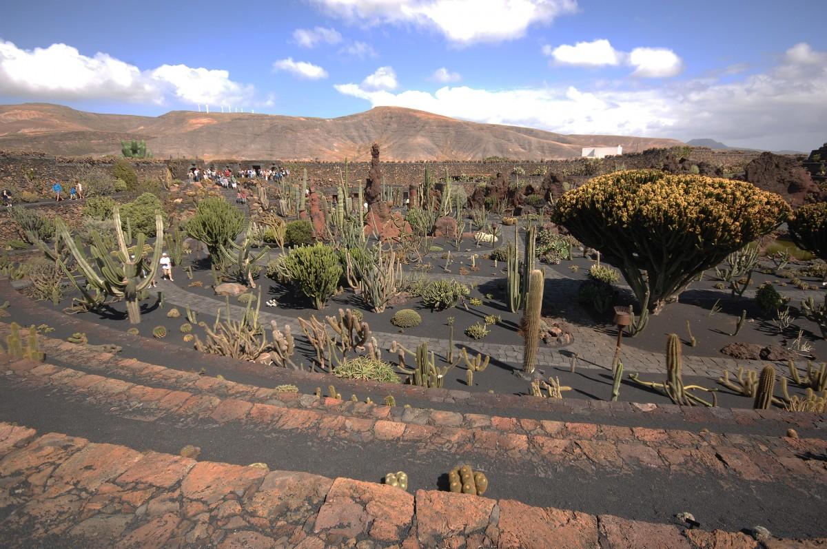 Jardín de Cactus bei Guatiza. Aufnahmedatum: 24. April 2011. - Landschaftsfot...