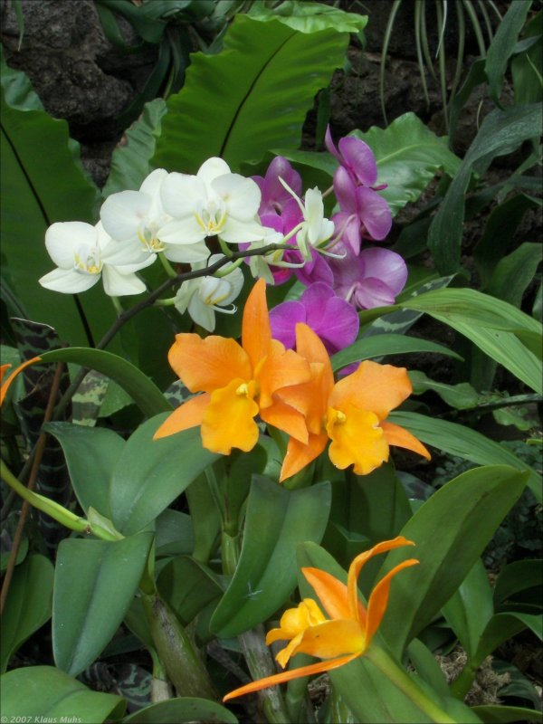 orchideen ausstellung im botanischen garten rombergpark. Black Bedroom Furniture Sets. Home Design Ideas