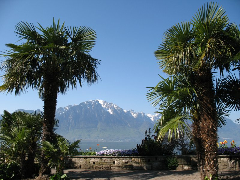 palmen umrahmter blick von der seepromenade in montreux. Black Bedroom Furniture Sets. Home Design Ideas
