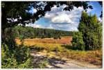 Wanderweg vom Wilseder Berg Richtung Undeloh, August 2013