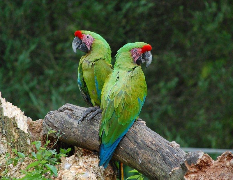 Zootiere fotos for An und verkauf gebrauchtmobel